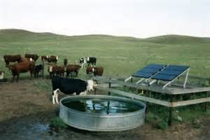 Cows-with-solar-waterer