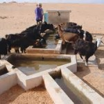 Remote Water source for Livestock