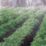 irrigation-mister